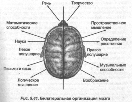 Билатеральная организация мозга