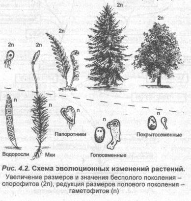 biologicheskie-etapyi