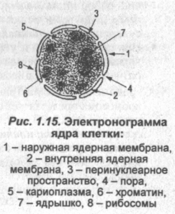 elektronogramma-kletkai