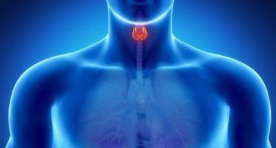 endokrinnaya-sistema