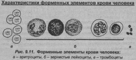 Характеристики Форменных элементов крови человека