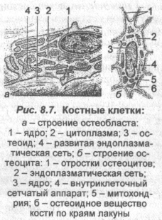 kostnyie-kletki