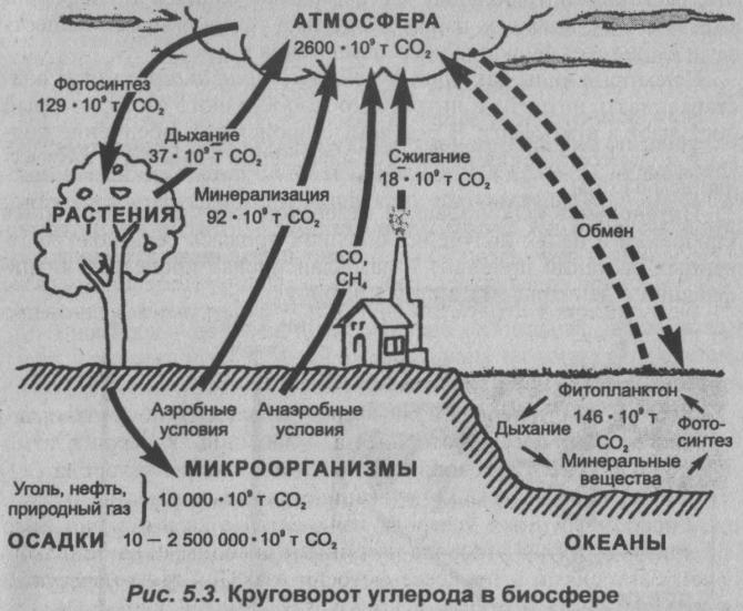 krugovorot-ugleroda-v-biosfere