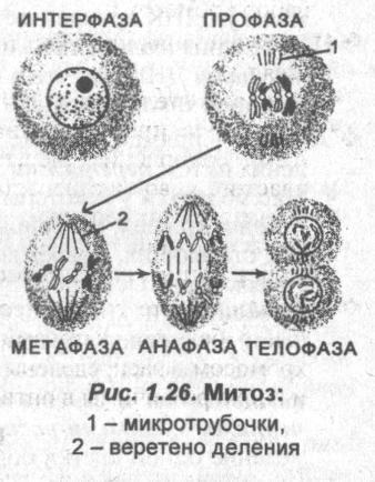 metoz