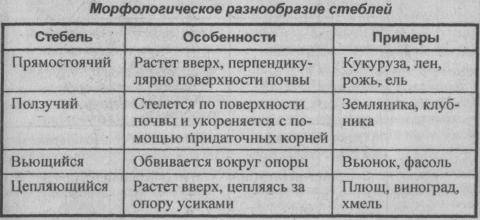 morfologicheskoe-raznoobrazie-steblya