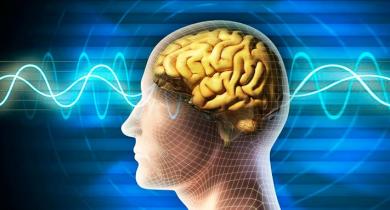 nervnaya-sistema-cheloveka