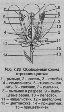 obobshhennaya-shema-stroeniya-tsvetka