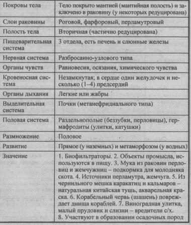 obshhaya-harakteristika-tipa-mollyuski-1