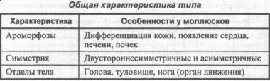 obshhaya-harakteristika-tipa-mollyuski