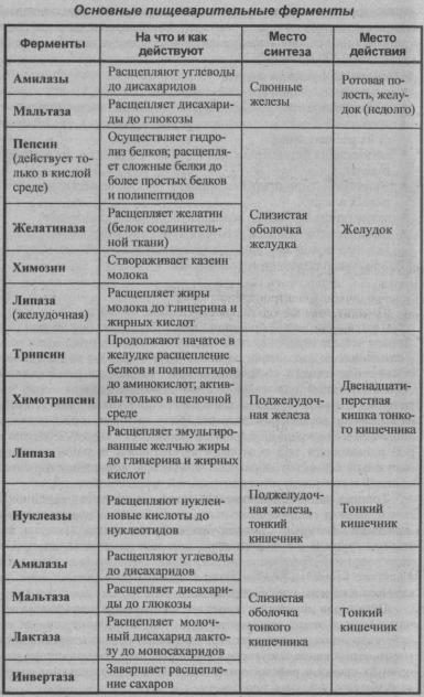 osnovnyie-pishhevaritelnyie-fermentyi