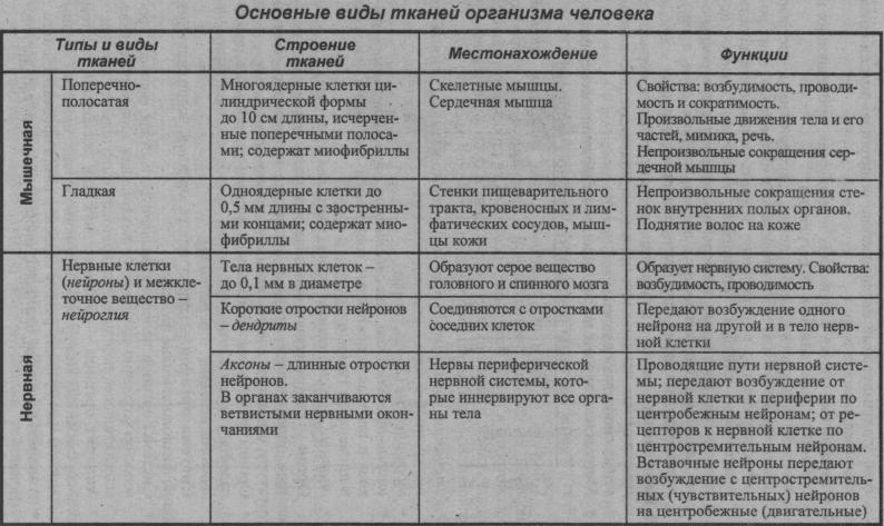 osnovnyie-vidyi-tkaney-organizma-cheloveka