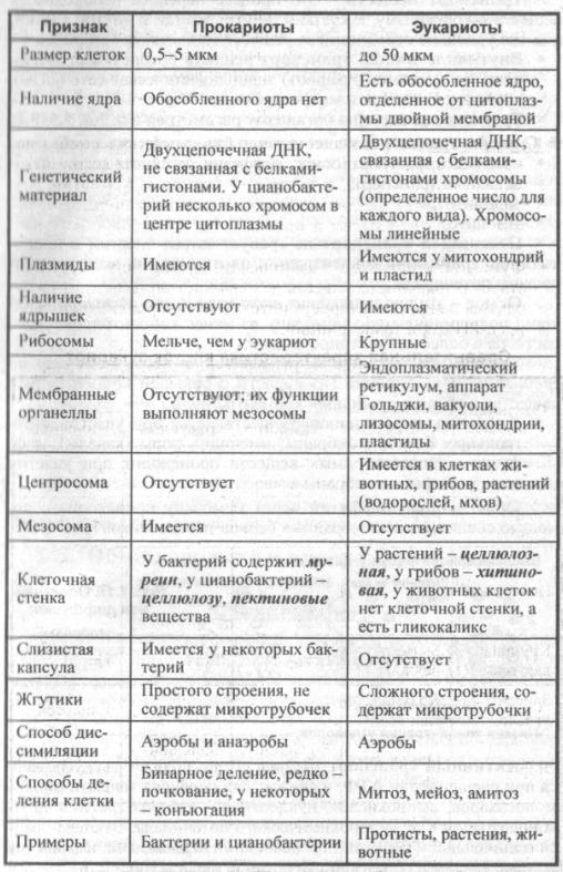 osobenosti-stroeniya-prokarioticheskoy