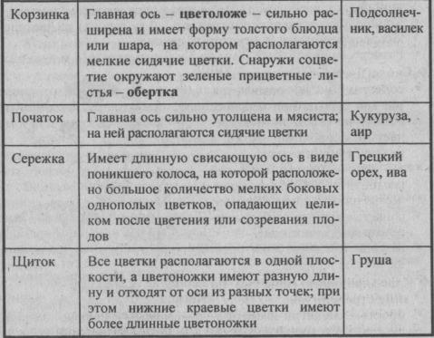 prostyie-sotsvetiya-prodolzhenie