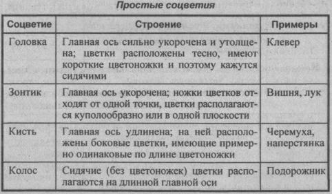 prostyie-sotsvetiya