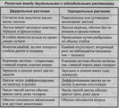 razlichiya-mezhdu-dvudolnyimi-i-odnodolnyimi-rasteniya