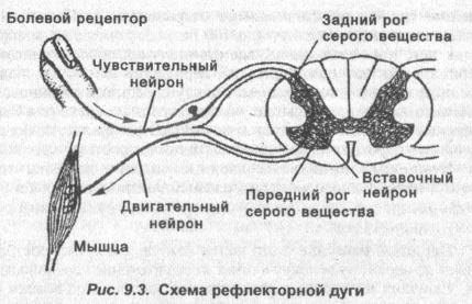 shema-reflektornoy-dugi