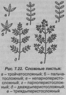 slozhnyie-listya