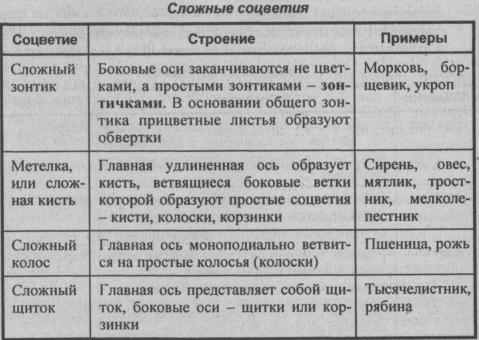 slozhnyie-sotsvetiya