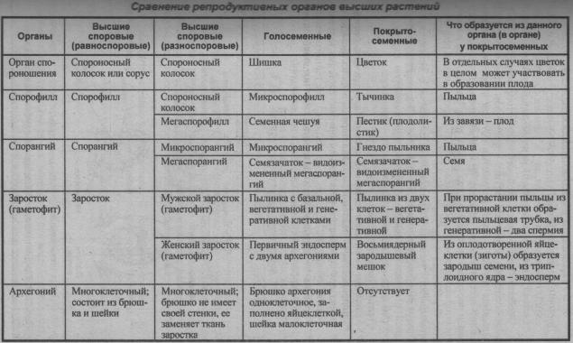 sravnenie-reproduktivnyih-organov-vyisshih-rasteniy
