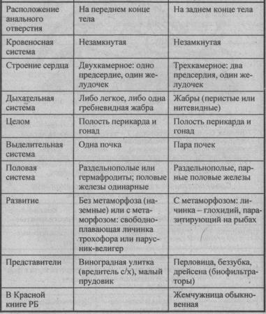 sravnitelnaya-harakteristika-bryuhonogih-i-dvustvorchatyih-mollyuskov-1