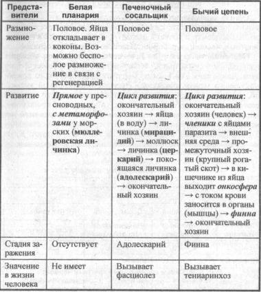sravnitelnaya-harakteristika-klassov-tipa-ploskie-chervi-i-ih-predstaviteley-1