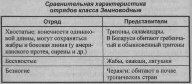 sravnitelnaya-harakteristika-otryadov-klassa-zemnovodnyie