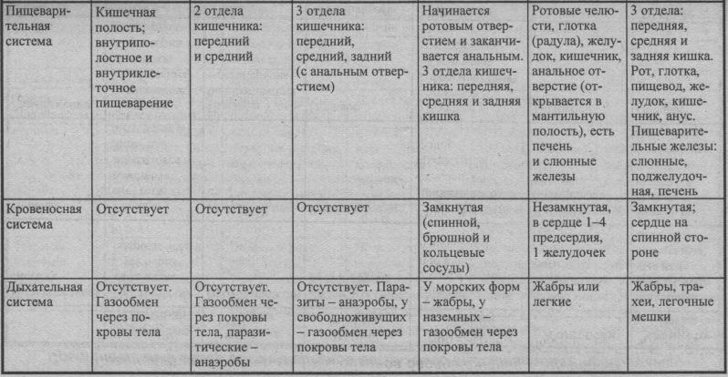 sravnitelnyiy-obzor-sistem-organov-bespozvonochnyih-zhivotnyih-2
