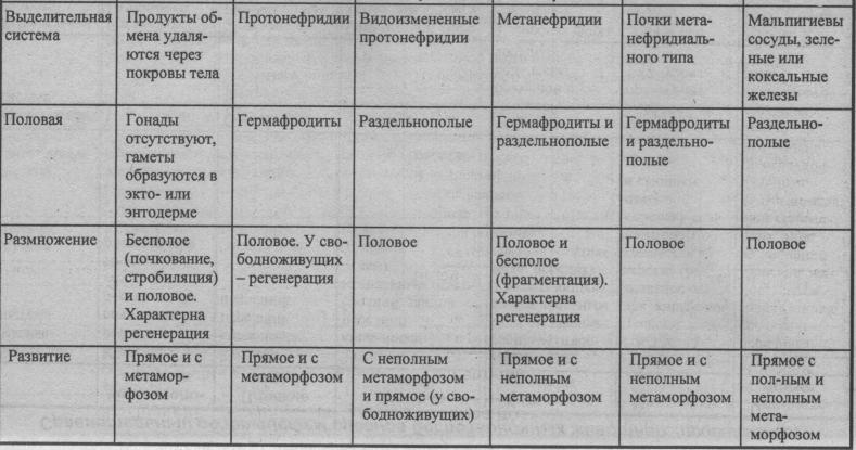 sravnitelnyiy-obzor-sistem-organov-bespozvonochnyih-zhivotnyih-3