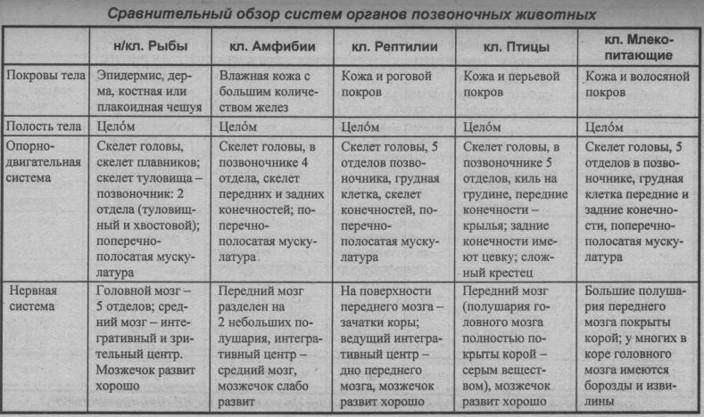 sravnitelnyiy-obzor-sistem-organov-pozvonochnyih-zhivotnyih