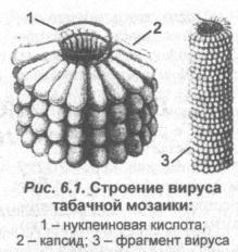 stroenie-virusa-mozayki