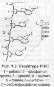 struktura-rnk