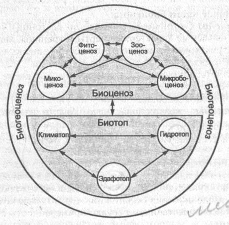 struktura-biogeotsenoza
