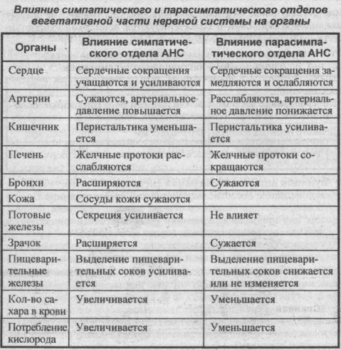 Влияние симпатического и парасимпатического отделов вегетативной части нервной системы на органы
