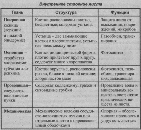 vnutrenne-stroenie-lista
