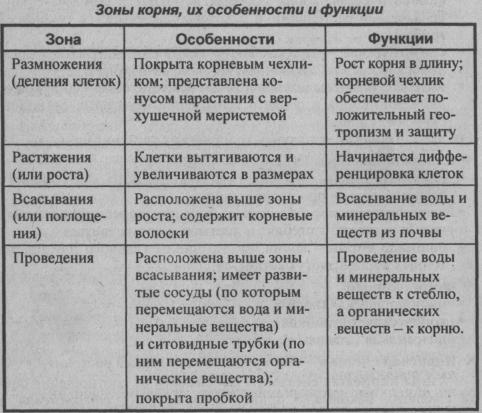 zonyi-kornya-ih-osobennosti-i-funktsii