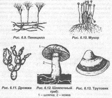 vidyi-gribov